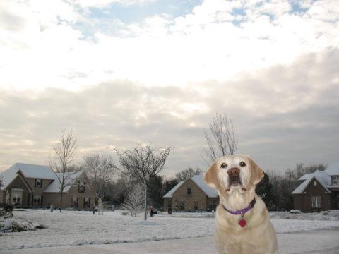 snowday2008-12-12