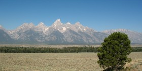 WY 2008-08 Grand Tetons - Tree.jpg