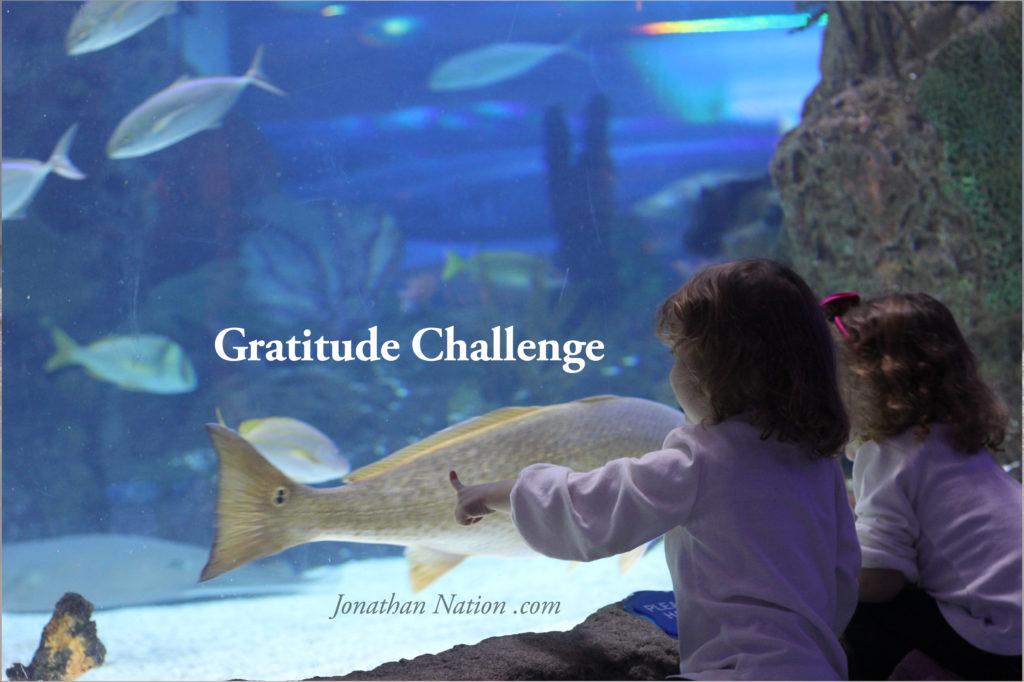Jonathan Nation - Gratitude Challenge 2014d4